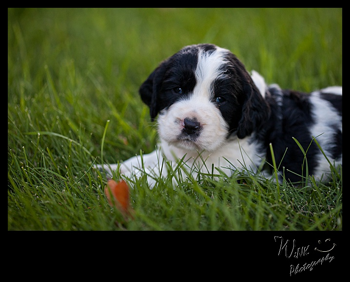 wink-photography-priest river-idaho-puppies-28