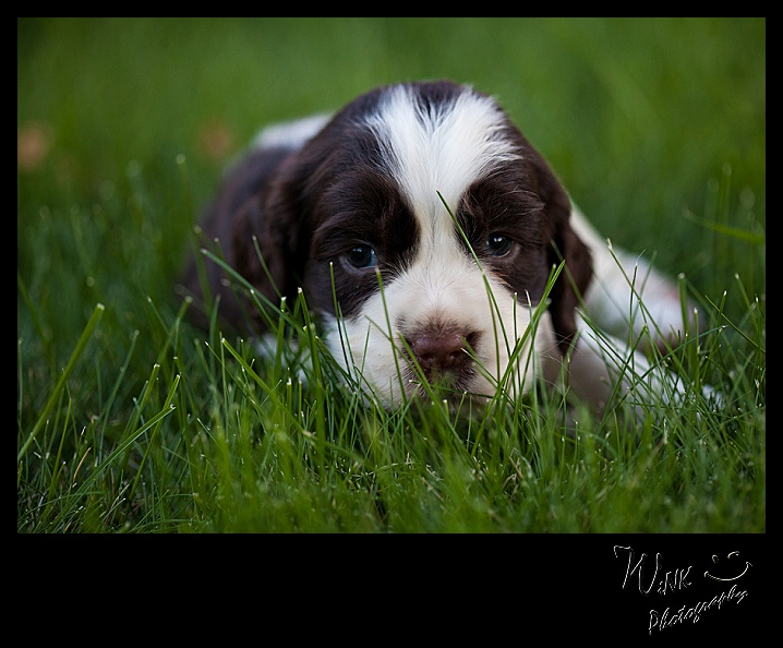wink-photography-priest river-idaho-puppies-23